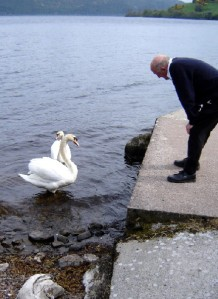 Loch Ness swans and Capt'n
