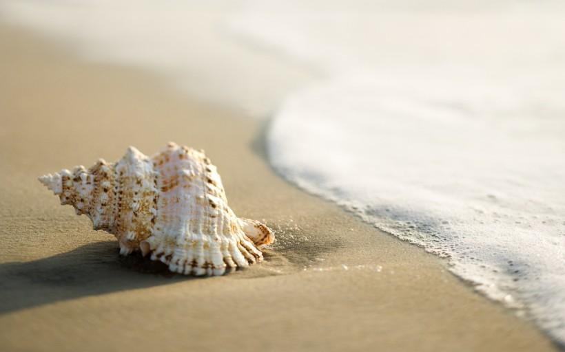 flagwallpapers.com, shell against sea