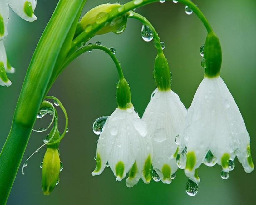 rainflowers, wallpoper.com