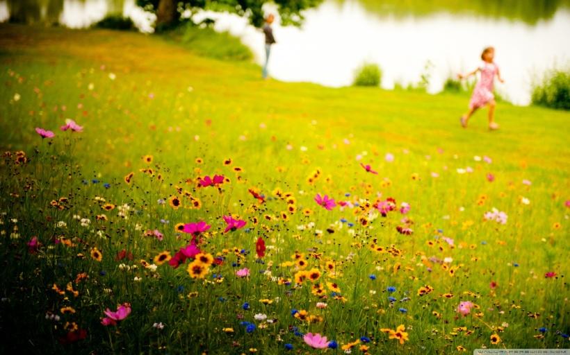 wallpaperswide.com fields of joy