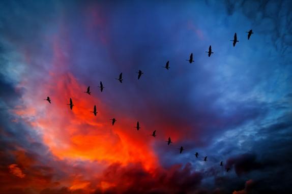 540572_canada_geese_v_formation_sunset_2048x1364_(www_GdeFon_ru)
