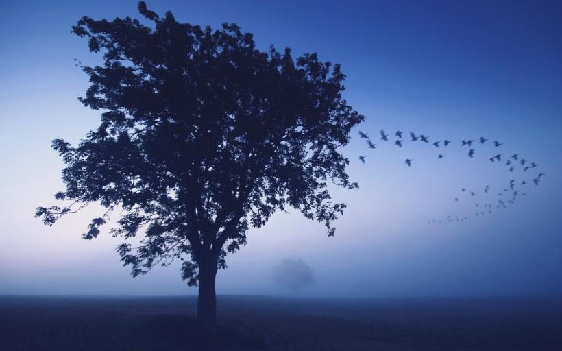 by Mukesh Mishra, wallpapergang.com