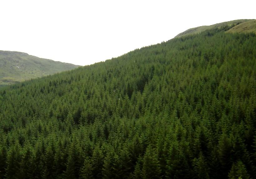 Green woods, Scotland2008 SMichaels