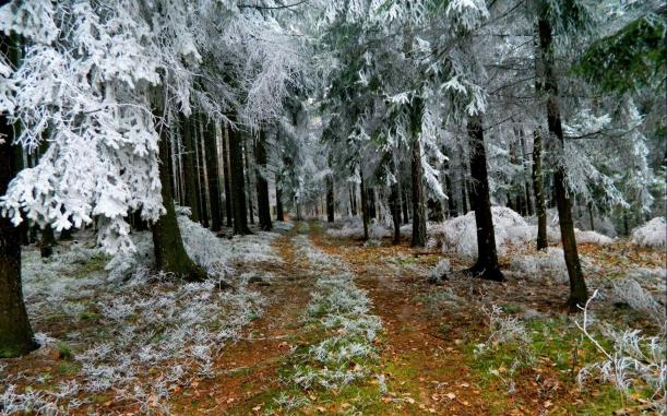 trail-in-frosty-winter-forest-247588