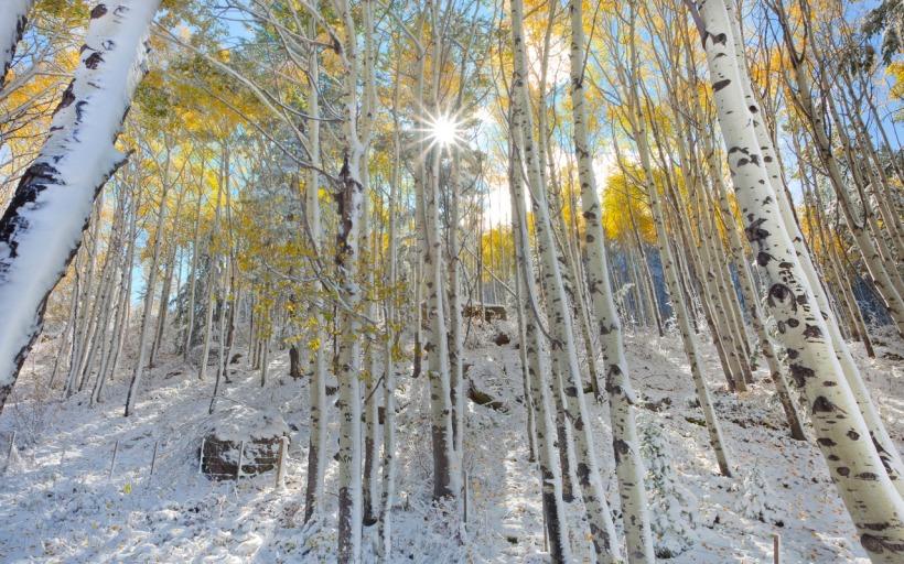 winterwoods, nature.desktopnexus.com