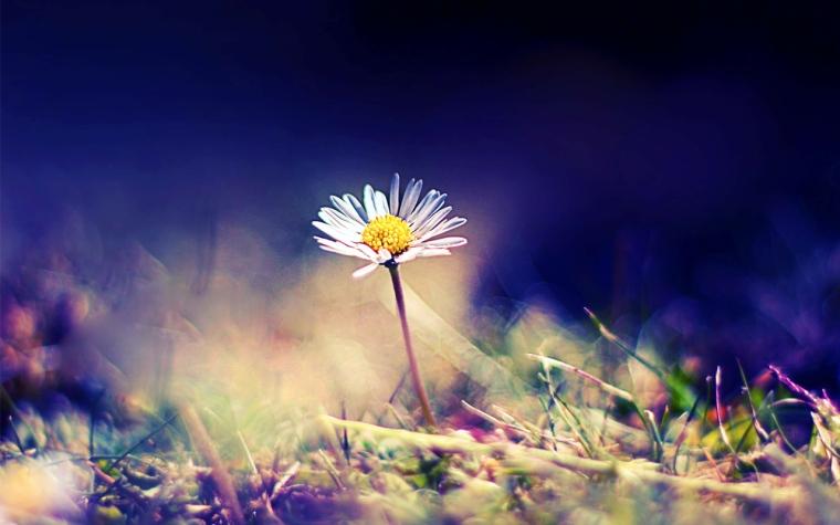 daisy-405166-wallsave.com