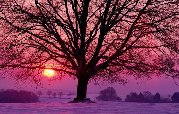 winter sun, goodfon.com
