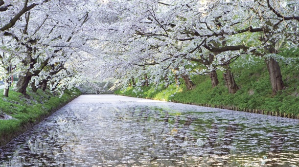 white-cherry-river-free-desktop-wallpaper-1920x1080