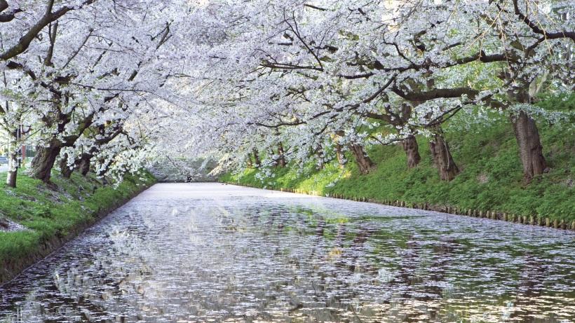 white-cherry-river-free-desktop-wallpaper-1920x1080