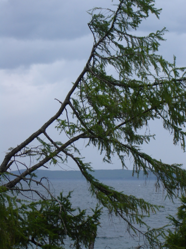 Torosay pine