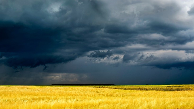Dark Stormy Skies Over Golden Fields HD Desktop Background