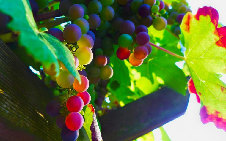 awesome-grapes-wallpaper