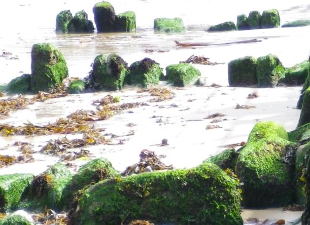 seaweedscape-201309