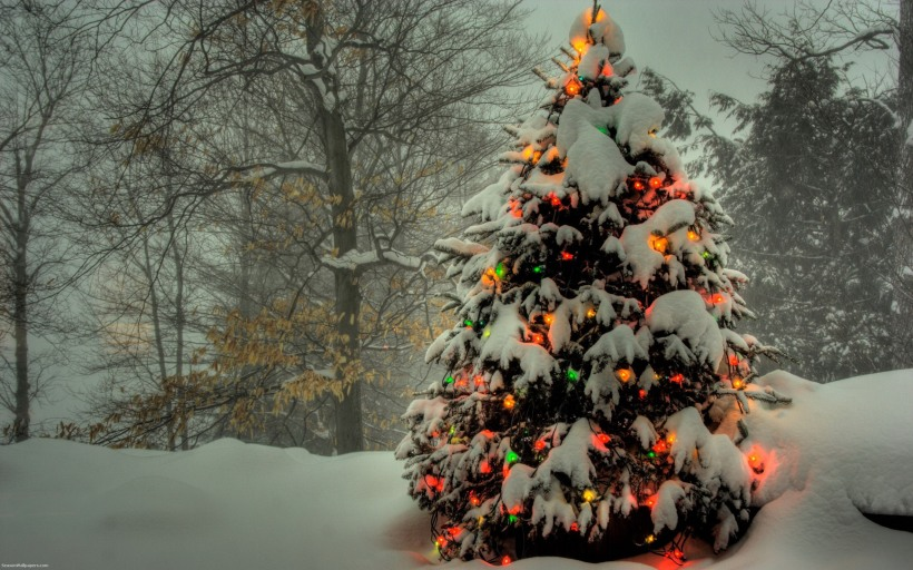 a-beautiful-christmas-tree-covered-with-snow-in-the-forest_2560x1600