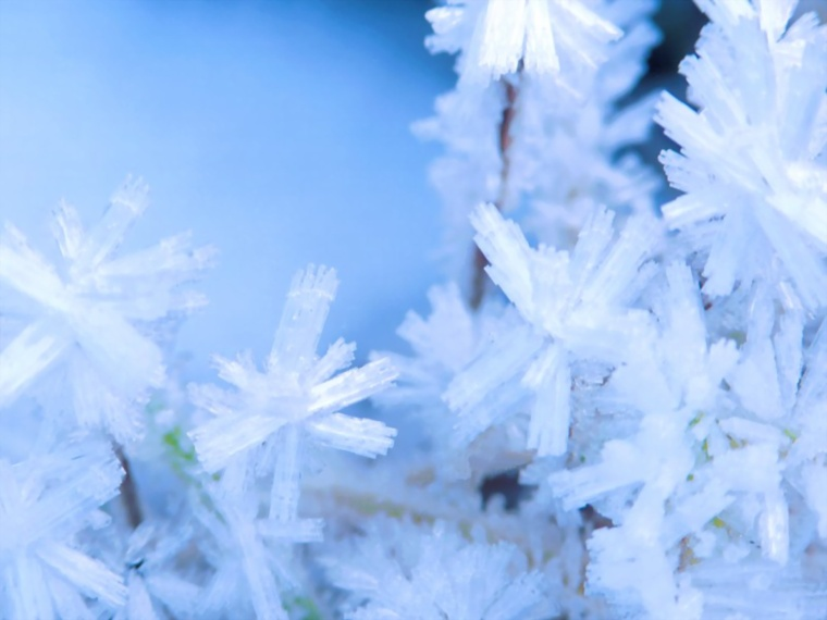 hoar-frost-purcell-mountains-hd-wallpapers