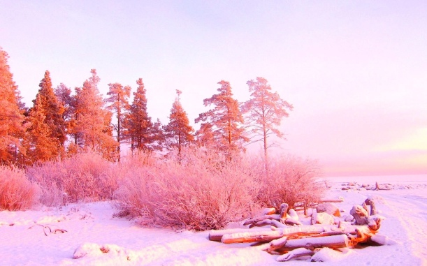 pink-winter-wide