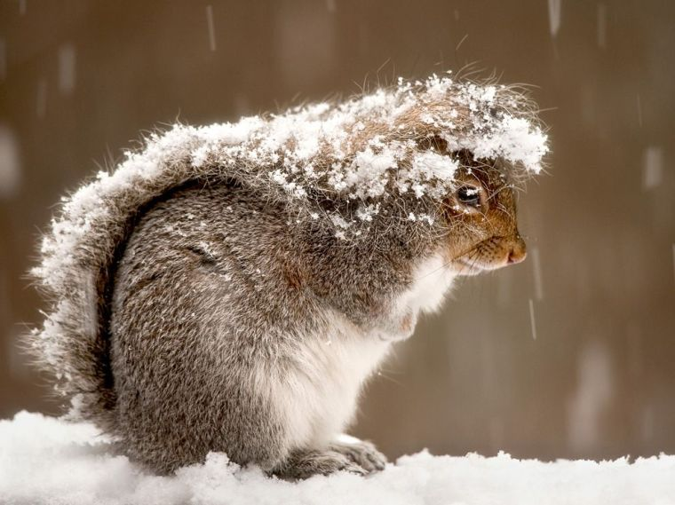 squirrel-snow-storm_47916_990x742
