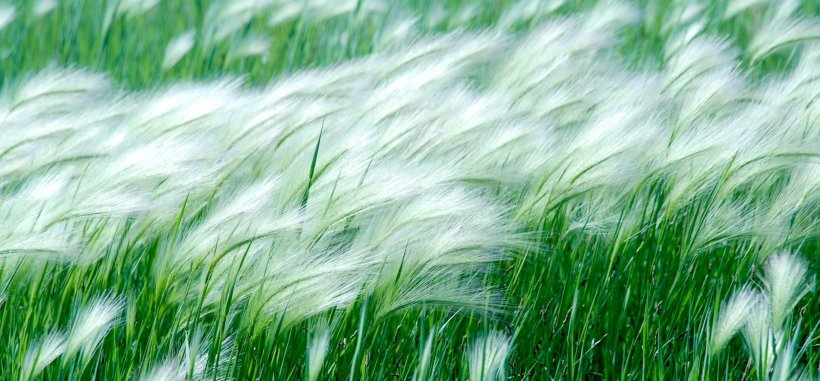 wallpaper-wind-on-grass-weather