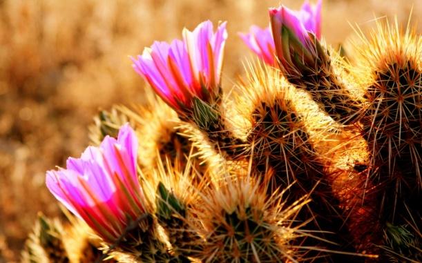 desert_flowers-1280x800