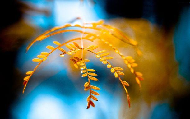 golden-foliage-hdw7.com
