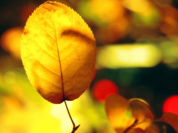 Leaves-Photography-Golden-Leaves-Under-Sunshine-Incredible-Scene