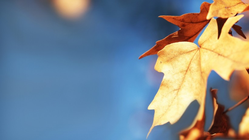 fall-foliage-against-the-blue-sky_00450925