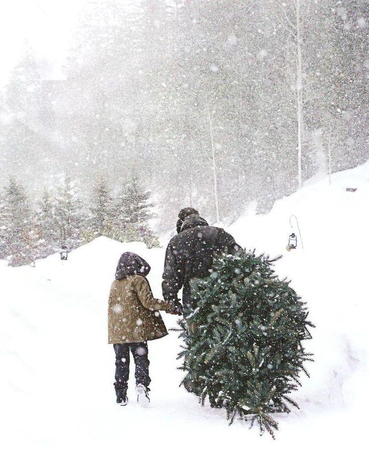 bringing home tree