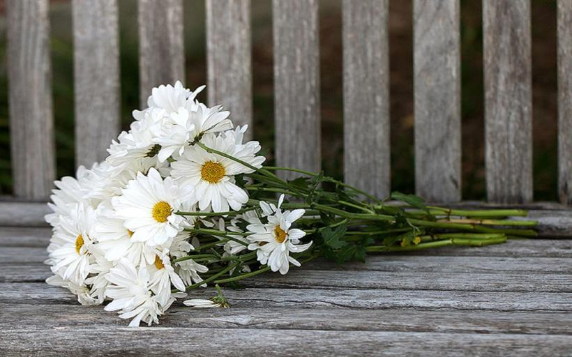 bouquet_of_daisies-970170