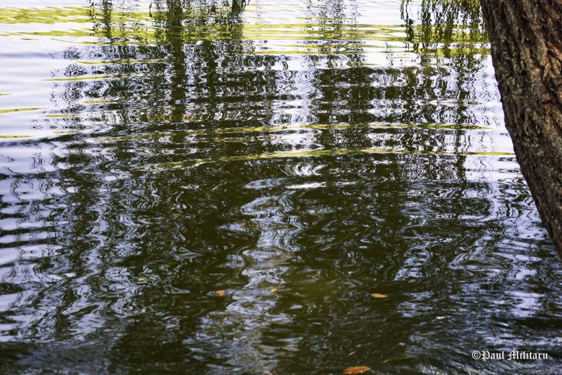 calm waters under  willow