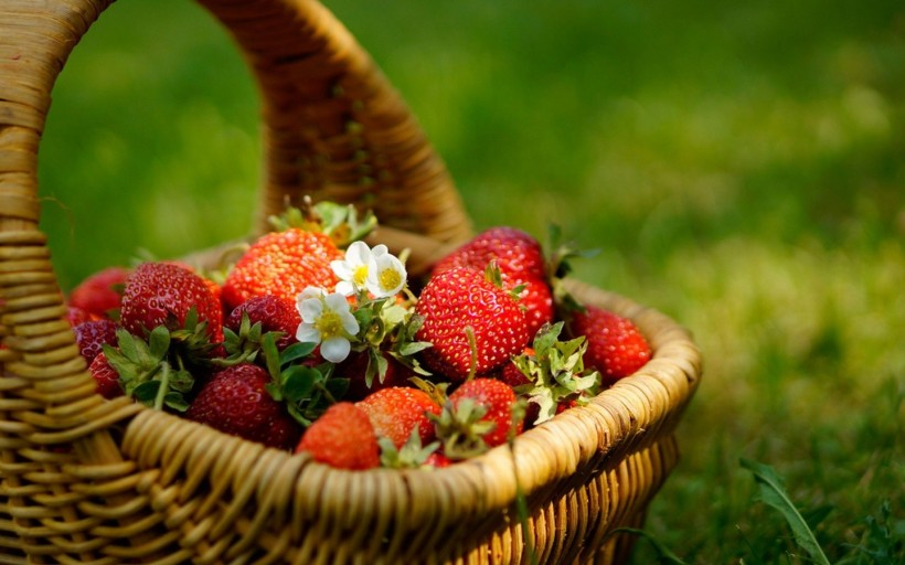 fresh-strawberries-basket-green-grass-hd-flowers-1440x900
