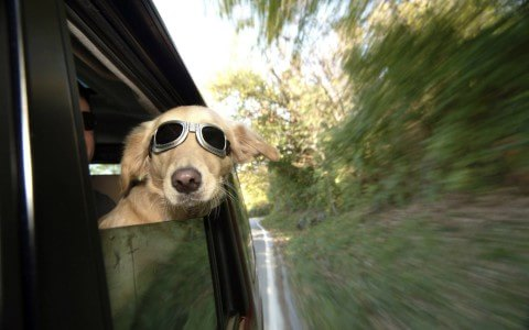 sunglasses-dog-enjoy-funny-glasses-255664