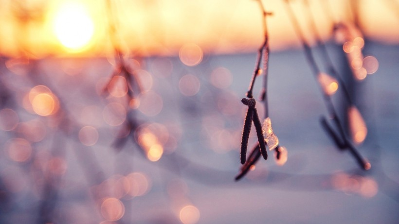 winter-up-macro-photography-close-frosted-frosty-twigs-light-frost-softness-branch-abstract-frozen-sunshine-nature-snow-ice-free-themed-desktop-wallpaper