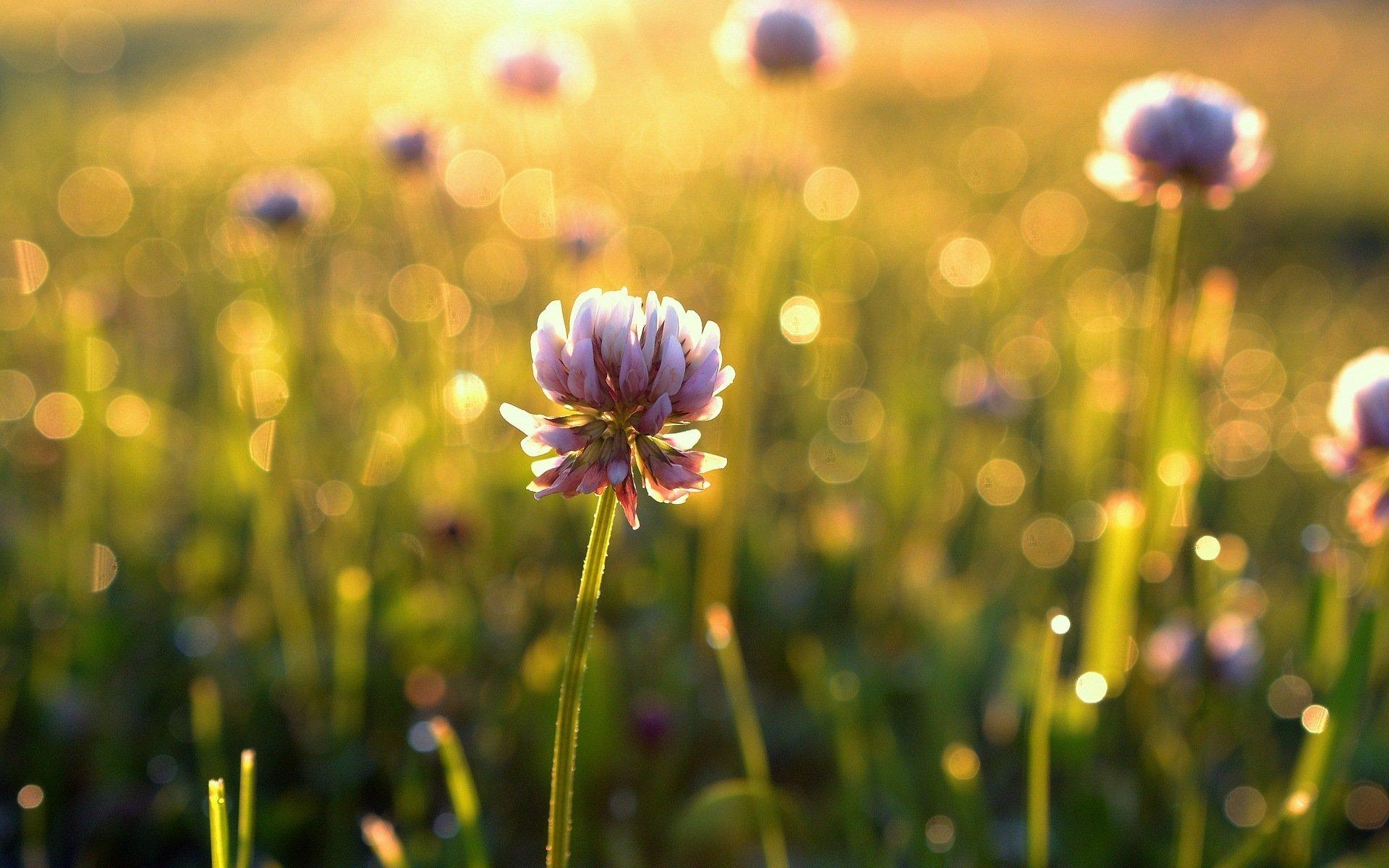 Summer Flower Field Wallpaper l i g h t room   Word(...